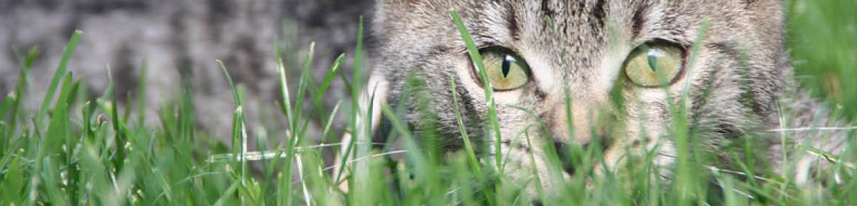 Använder grannens lösgående katt barnens sandlåda som toalett? Eller har rådjuren knaprat på vårens spirande lökar? Silverline Pest Protect system löser problemet helt utan gifter, med Katt & Hundfritt KH200 och Katt & Viltfritt KV 300.